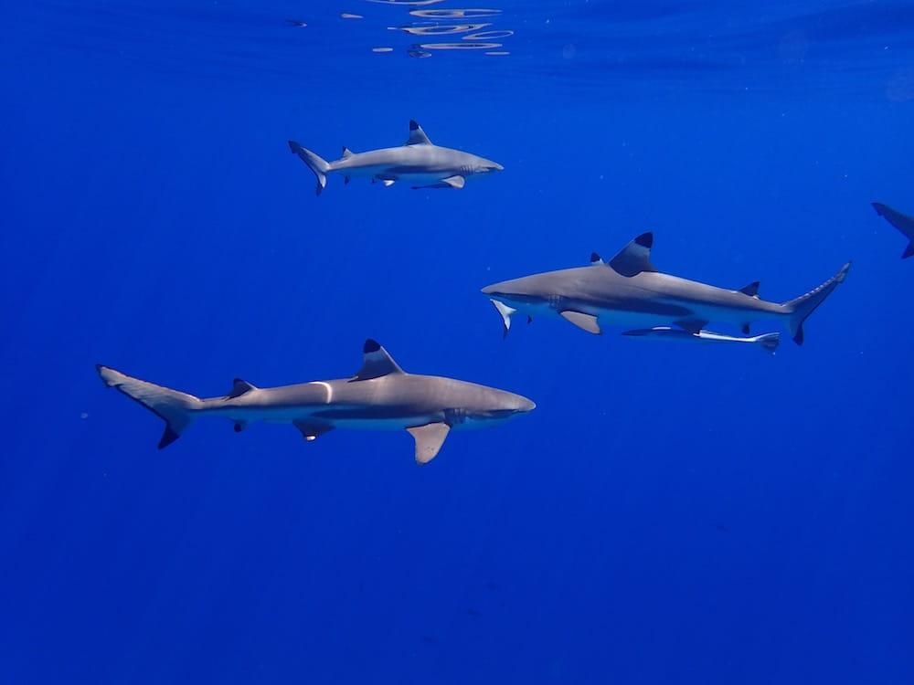 thomas_borb__unsplash_Shark photo