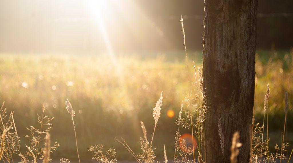 Morning Light on trees by photographer Zwaddi